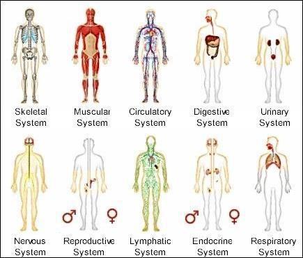 Human Body Systems Worksheet | Body systems, Human body and Worksheets