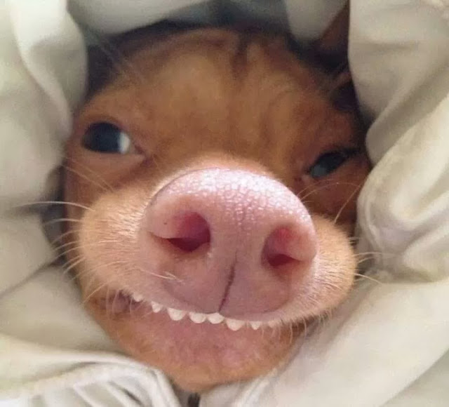 adorable dog pictures, cute dog with funny teeth