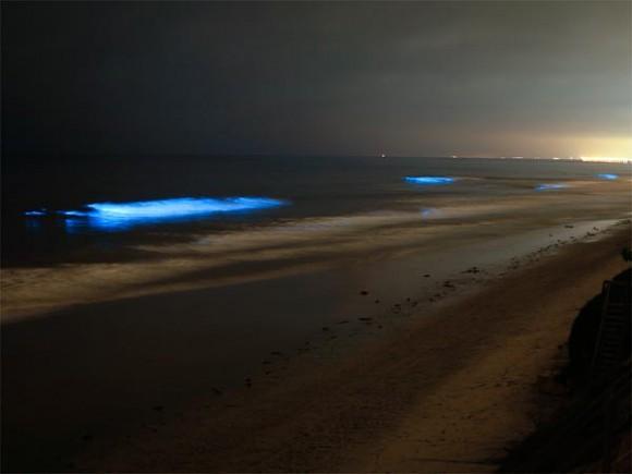 عندما تتلألأ الشواطىء كالنجوم  Glowing-waves-bioluminescent-ocean-life-explained-california_50148_600x450-580x435