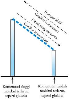 Transpor aktif dan difusi