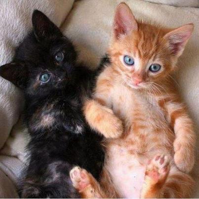 El gato segundo gato en casa - El gato en casa ...