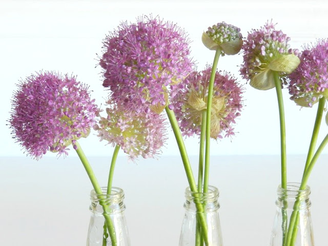 Soda Pop Bottle Flower Vases