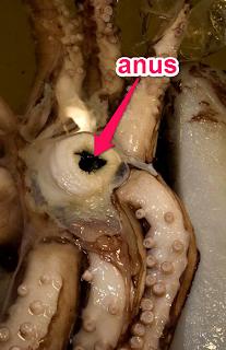 ink anus