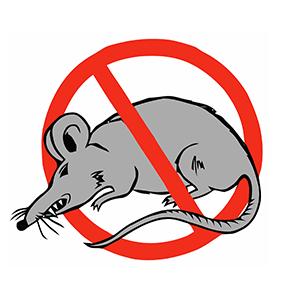 """¿ratas en la """"Casa de niños"""" ?"""