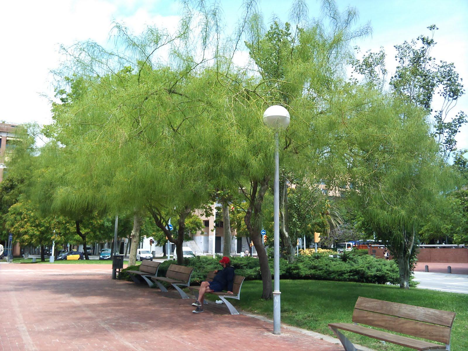 Jardines y parques en ambientes secos para los autores for Jardines sin plantas