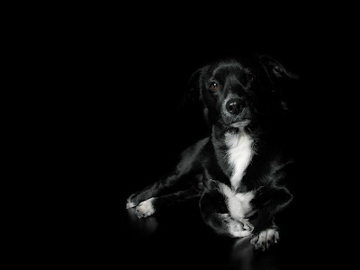 Black Dog Wallpaper Free