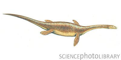 reptiles prehistoricos marinos Ceresiosaurus
