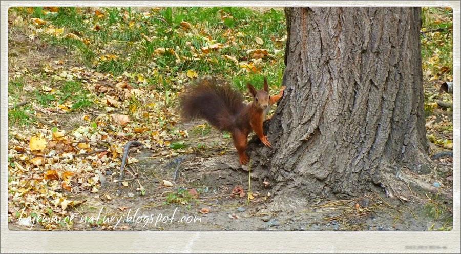 Tajemnice Natury, wiewiórki