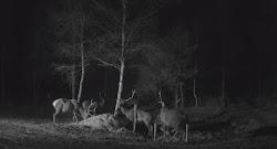 Cámara de ciervos