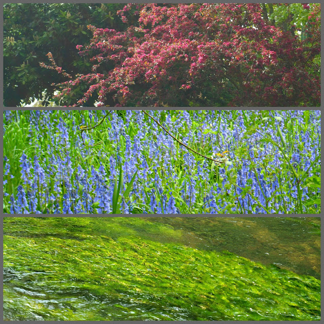 COlours- red flowers, bluebells, and green pond weed.
