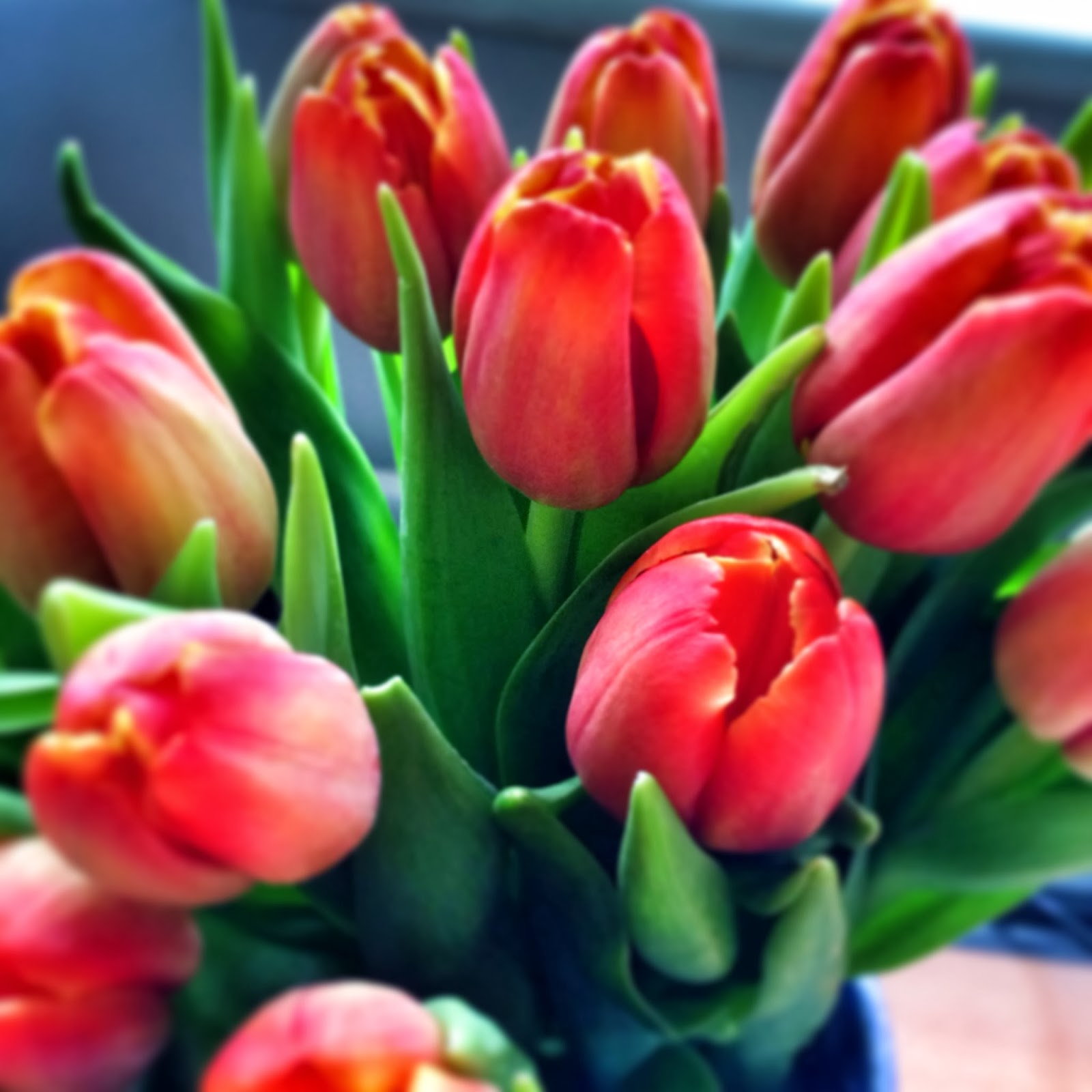 Beautiful Tulips that inspired a card - see it here