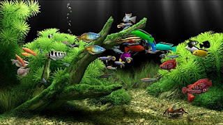 FERA DOWNLOADS GRÁTIS: Download.Dream_Aquarium 1.24 Full [versão ...