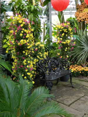 Allan Gardens Conservatory 2015 Chrysanthemum Show bench display by garden muses-not another Toronto gardening blog