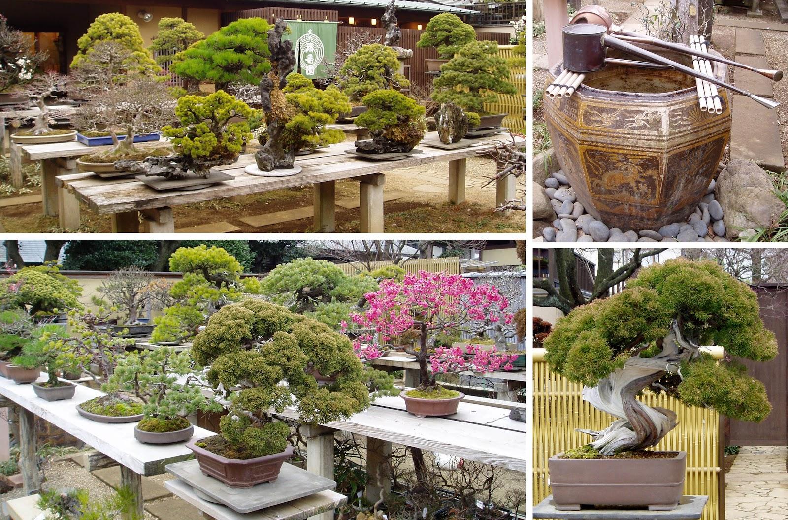 Kigawa39s Bonsai Blog Seiko En Omiya