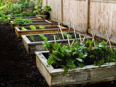 raised beds soil