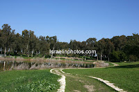 Antipatris, National Park, Tel Afek, The Water Lily Pool, Yarkon National Park