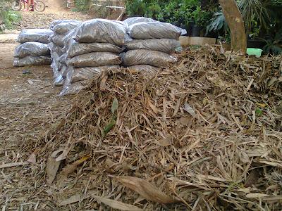 humus daun bambu untuk kompos