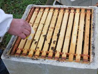 varroa mites, the bee destroyer, oxalic acid, mite eradicator