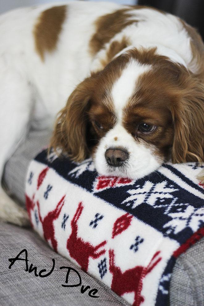 Cavalier king charles girl puppy - Christmas Blanket - UK Lifestyle blog
