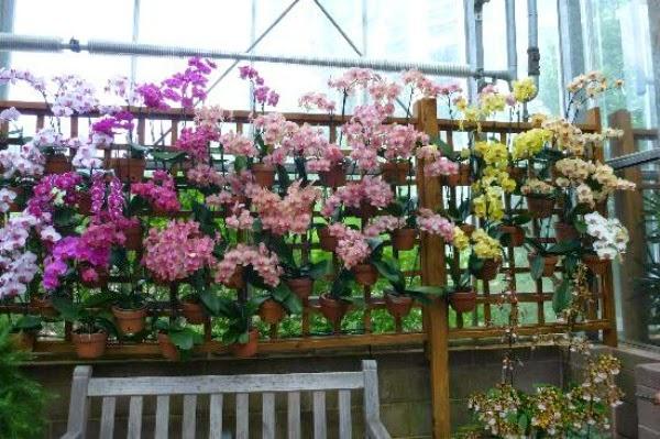 Decorar con orquídeas   guia de jardin. aprende a cuidar tu jardín.