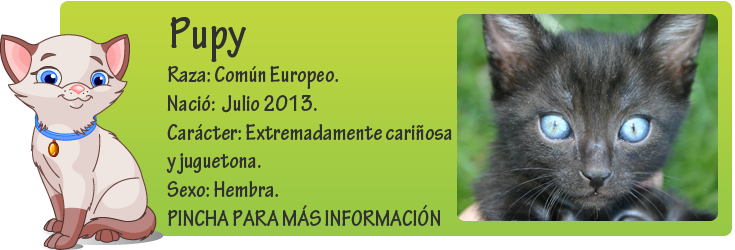 http://mirada-animal-toledo.blogspot.com.es/2013/08/pupy-pequenita-en-adopcion.html
