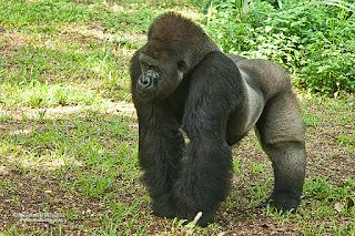 foto hewan dari kebun binatang memerlukan property release