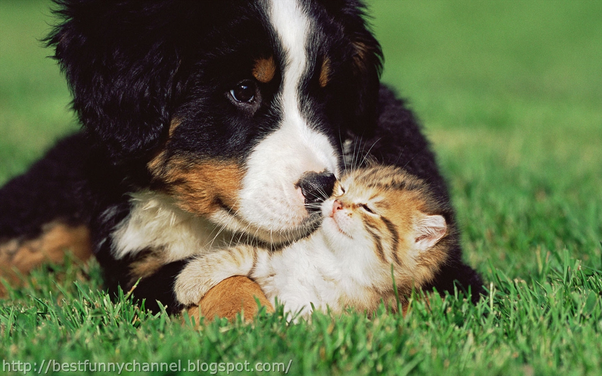 Cute and funny pictures of animals 51 friendship 3 for Best dogs for companionship