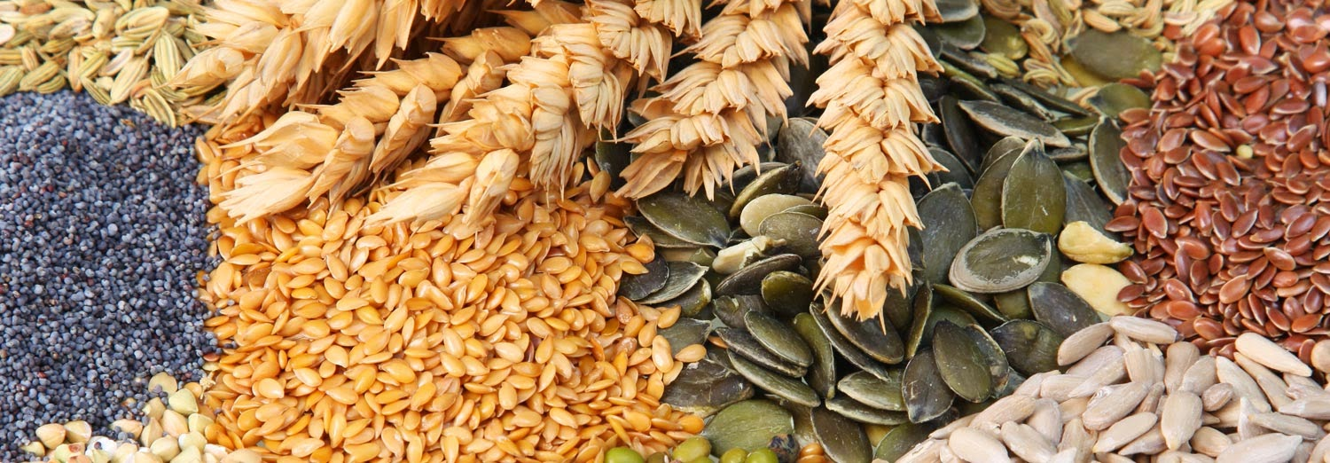 agri Commodity Tips, free agri tips, free agri calls, Future Trading Tips, delivery calls in MCX