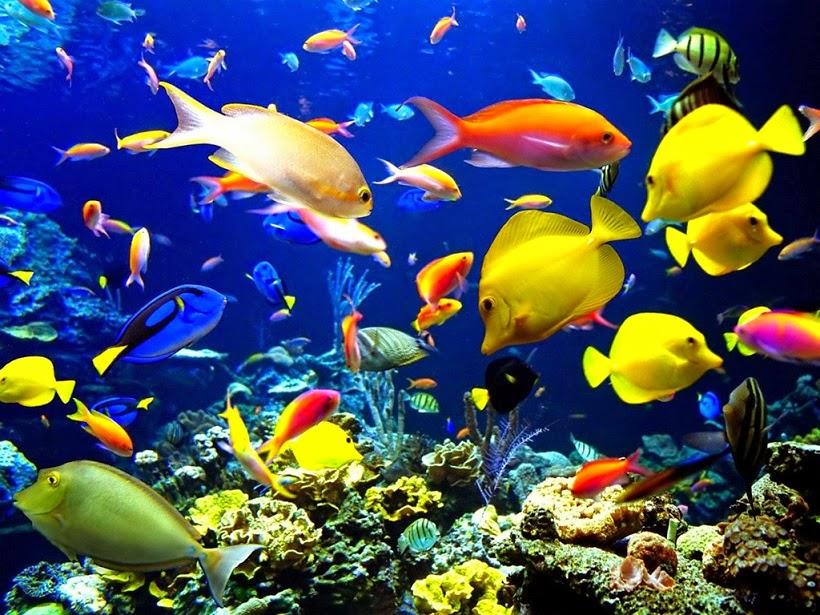 lặn biển thế giới tuyệt đẹp dưới lòng biển