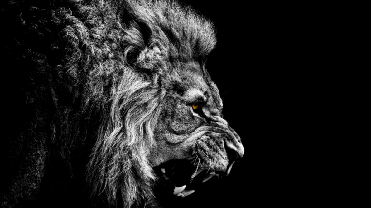 Roaring Lion Profile Tattoo FunMozar   Angry Roaring Lions