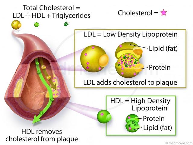 kolestrol baik