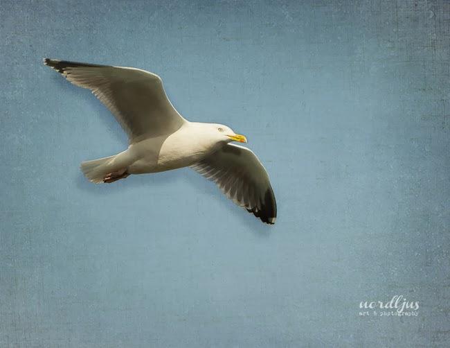 Nordljus Seagull