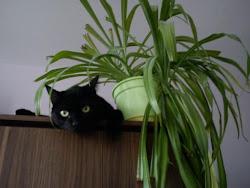 Moje koty: