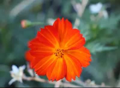 Flor do JotaV usado como original no processo