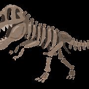 恐竜の化石・骨格標本のイラスト