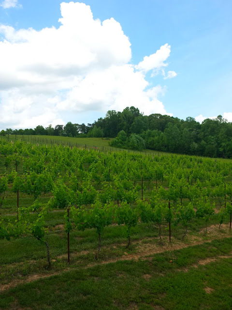 The view at Elkin Creek Vineyard.