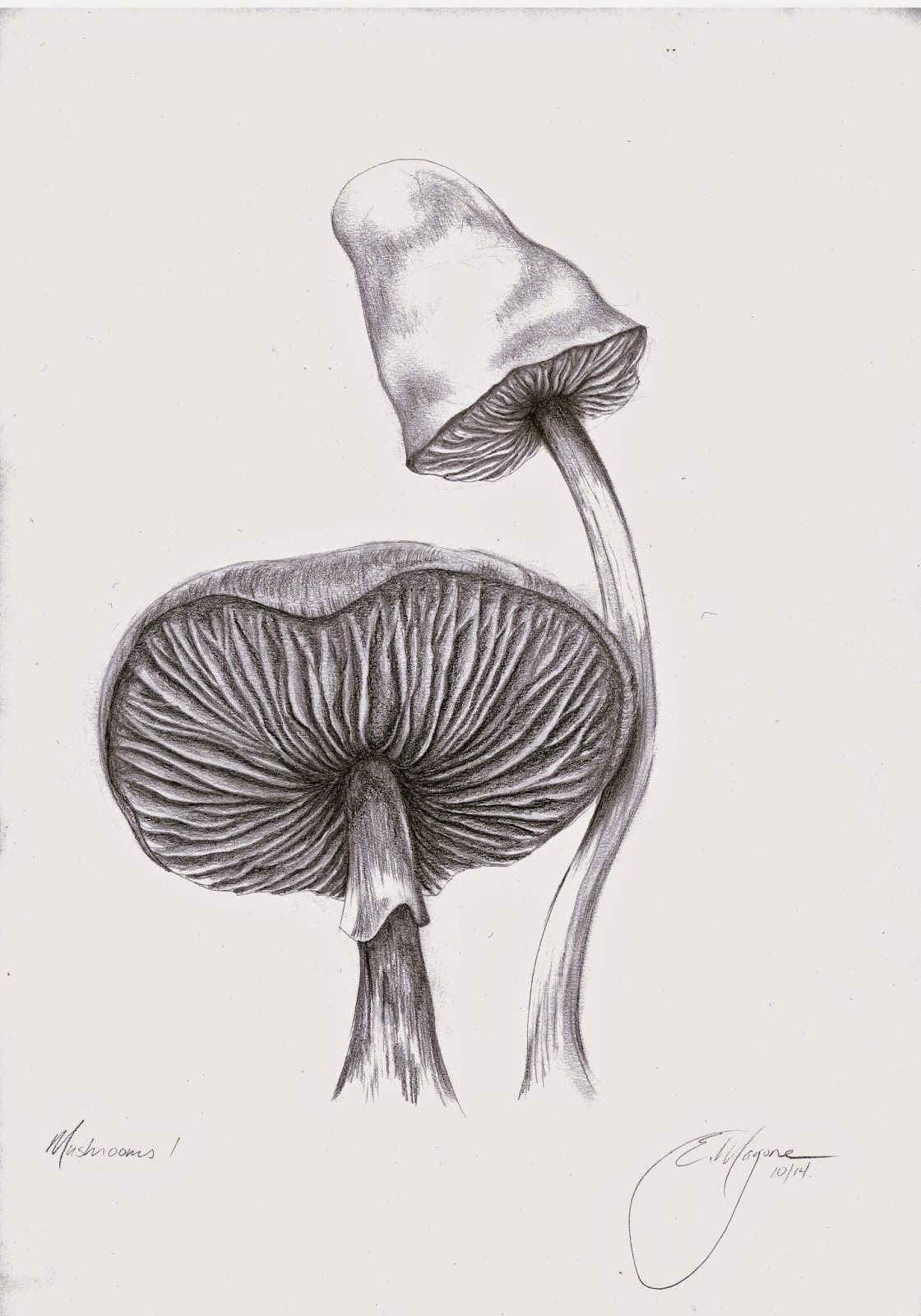 https://www.etsy.com/listing/205995341/original-mushroom-pencil-drawing-matted?ref=listing-shop-header-0