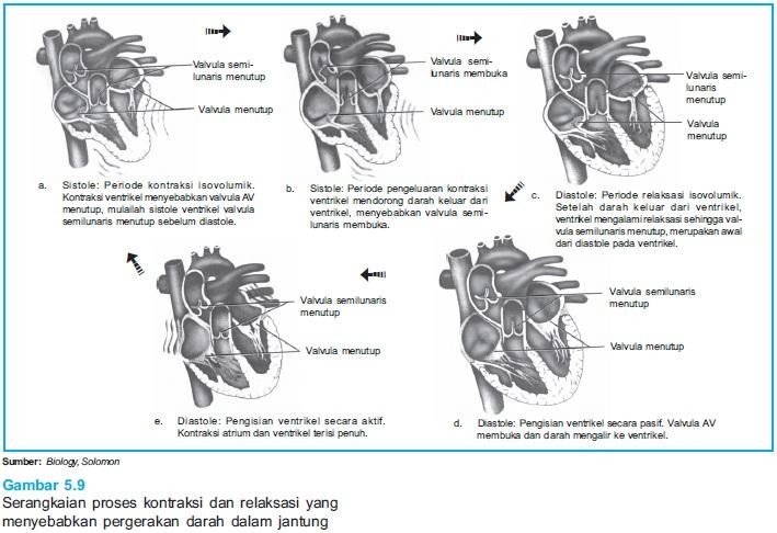 DIAN HUSADA FISIOLOGI: Fungsi jantung dan peredaran darah ...