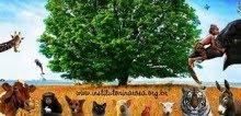 Projetos por Amor à Vida