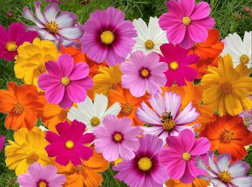 Beautiful Colourful Flowers Wallpapers Flowers Wallpapers Colourful