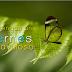FELIZ VIERNES / HERMOSO VIERNES / BUEN VIERNES / MARAVILLOSO VIERNES PARA TI