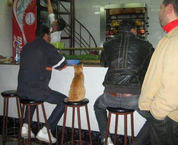 Funny cats - part 86 (40 pics + 10 gifs), cat sits in bar chair