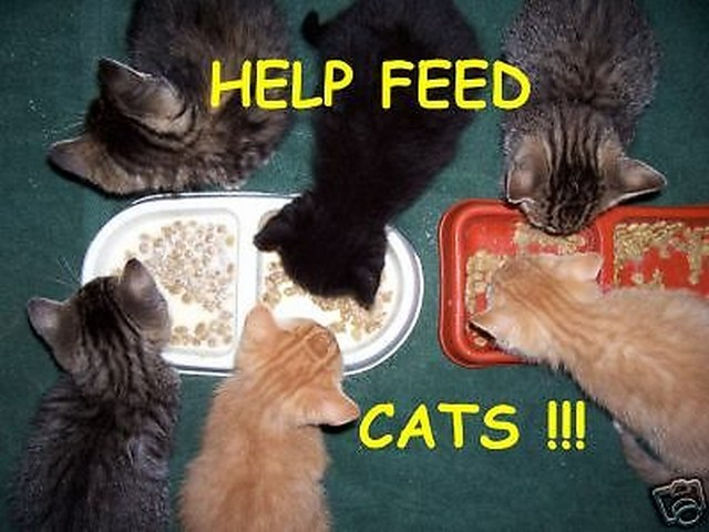 Help feed my cat colony!