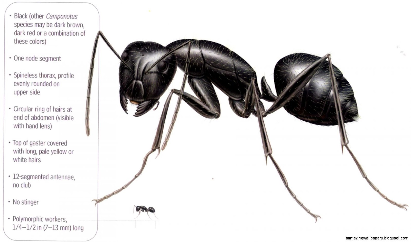 Do I have Carpenter Ants or Termites Pro Tips  Ocean County Pest