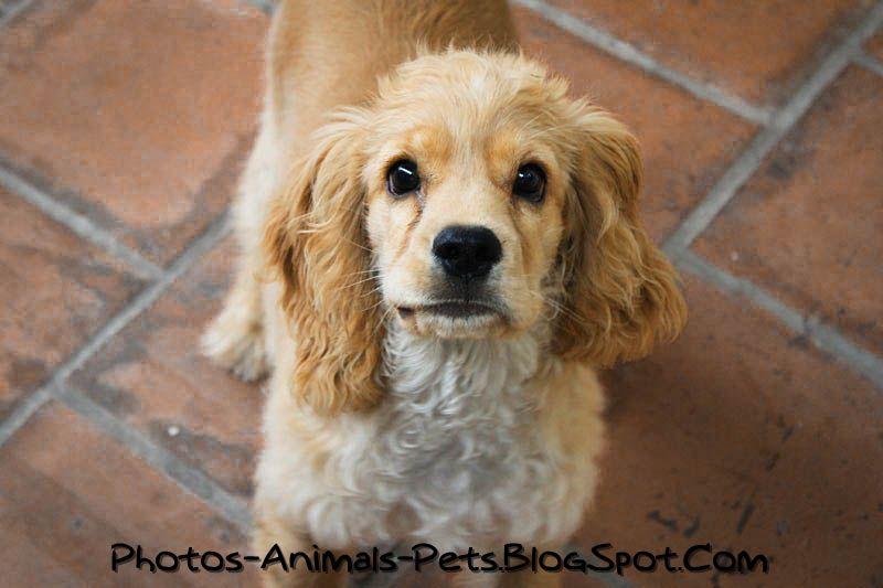 http://3.bp.blogspot.com/-kwg_h1qBcZM/TbWUOngh41I/AAAAAAAAAzw/RPgh0LaAD18/s1600/Cute%2Bdog_0003.jpg