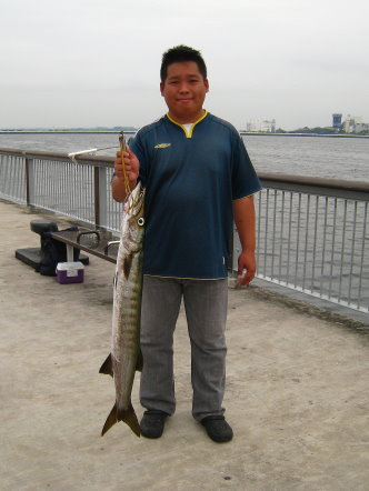 Yellowtail Barracuda [Sphyraena Flavicauda] also know as Saw Kun 沙君 [Hokkien] or Ikan Kacang [malay] weighing 4kg plus caught by ME at Woodland Jetty on 10th July 2013 using live Five-spot Herring or Assam fish (local), Selangat (malay) on float.