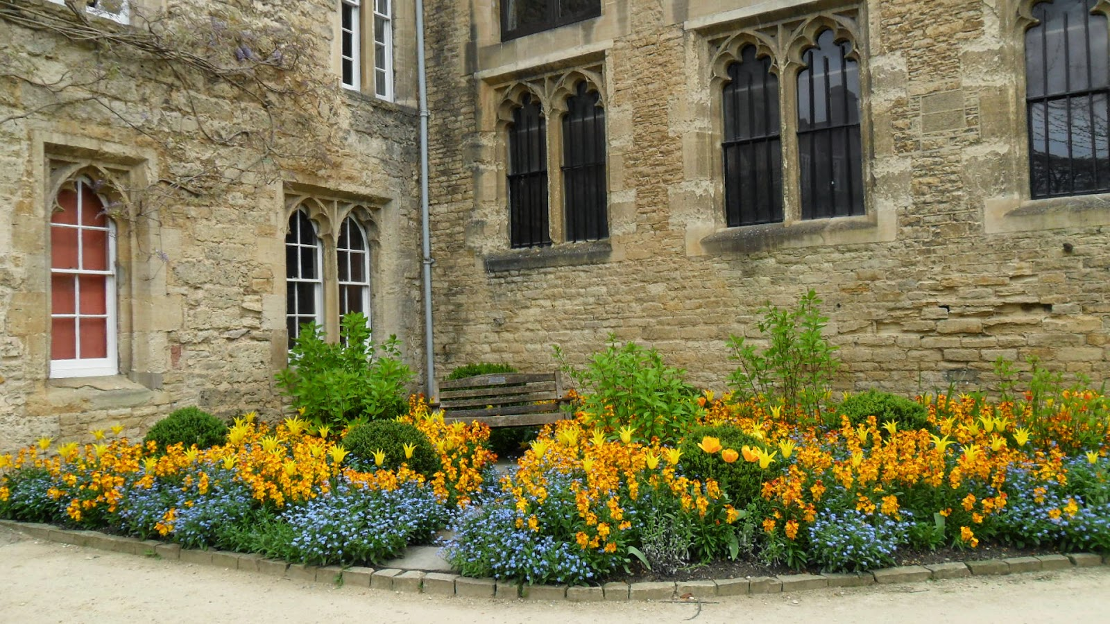Worcester College Gardeners Tulips And Wallflowers