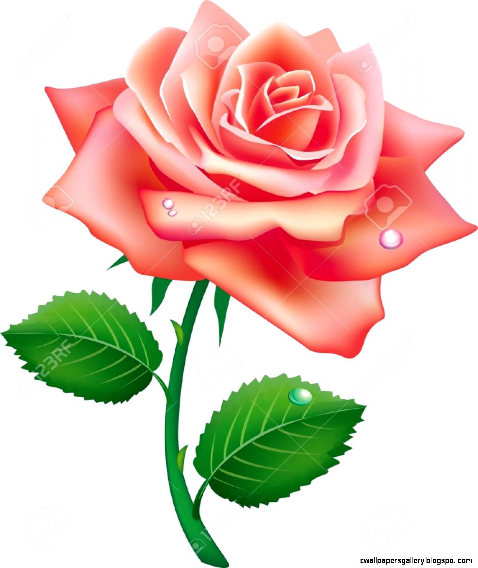 Illustration Of Single Rose Royalty Free Cliparts Vectors And