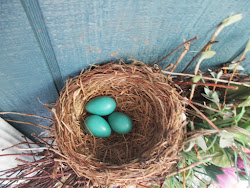 Robin's Egg Blue!