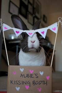 Kiss a Bunny